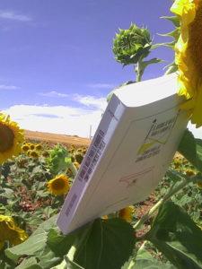 Girasol con libro - Aroma de mujer
