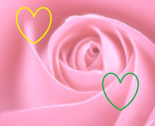 pasion de amor a distancia - aroma de mujer